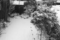 A snowy garden