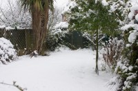 Snow on the Lawn